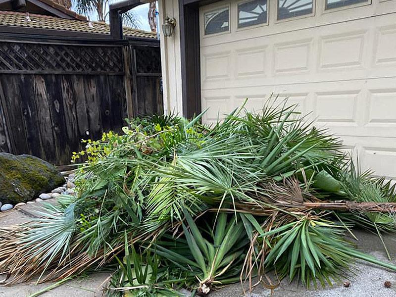 yard waste removal